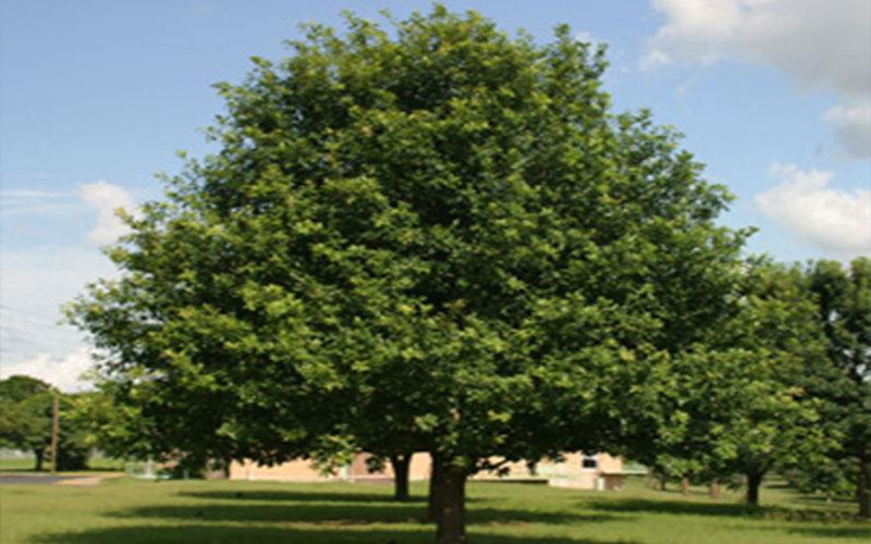 Tree Nursery Naples
